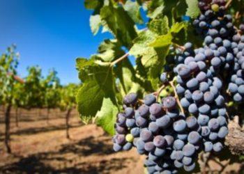 Туркестанские овощи и фрукты будут экспортировать в Татарстан 3