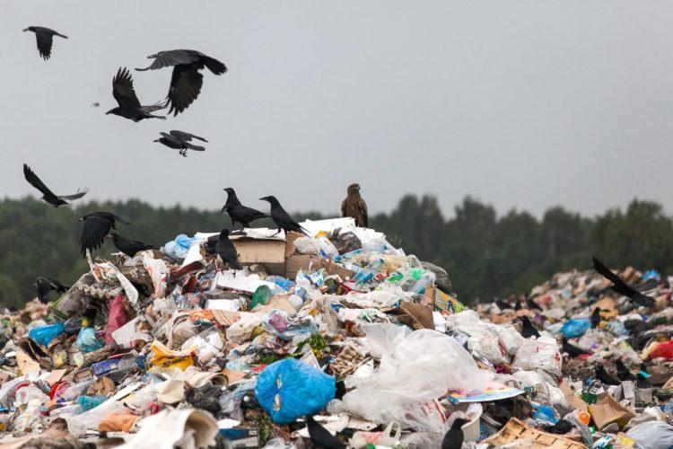 Мы хотим перемен! Или как очистить от мусора наши города? 1