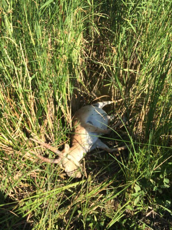 Трех жителей ЗКО подозревают в охоте на степную антилопу