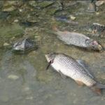 Число людей, утонувших в водоемах СКО растет 1