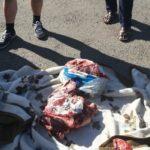 Мясо краснокнижной сайги обнаружили в свободной продаже в Карагандинской области 1