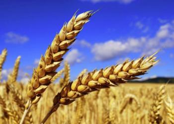 Зерно из резерва Правительства РК 1