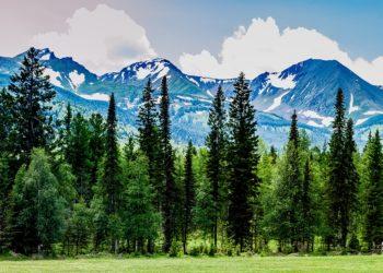 Как сохранить лес для потомков? 2