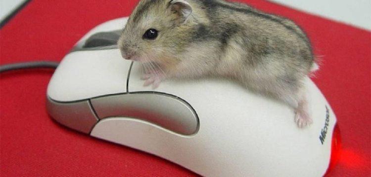 ЦОНу Нур-Султана через день вернули пропавшую компьютерную мышь