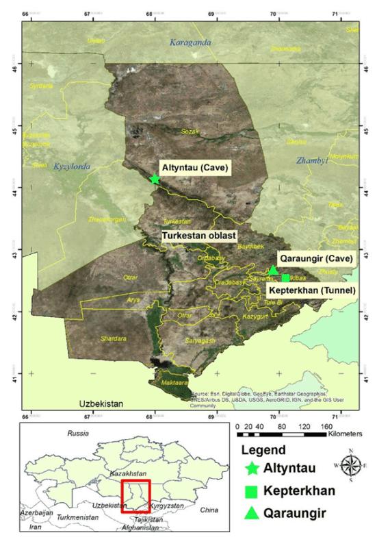 В Казахстане найдены летучие мыши, способные переносить смертельный коронавирус 1