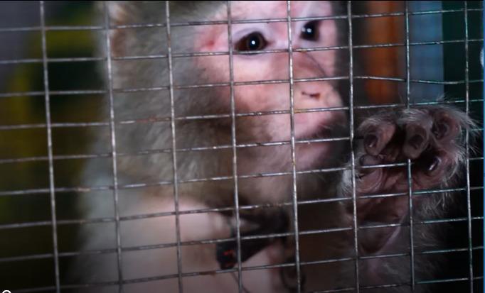 """Общественники требуют изъять животных из зоопарка """"Тортилла"""" в Шымкенте"""