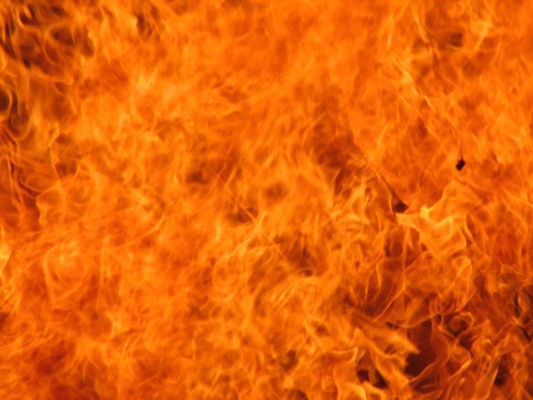 Пожар в приюте для животных Экибастуза: погибли десятки животных