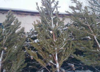 Подарить животным живые елки после праздников просят в зоопарке Алматы