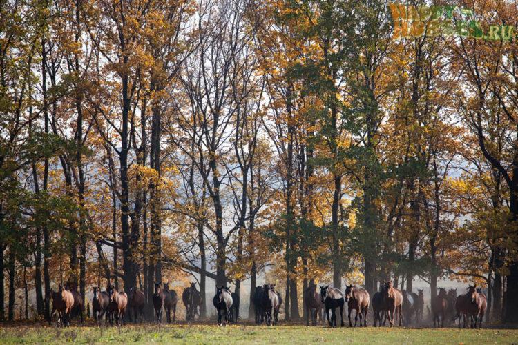 Отстреливал лошадей и сбывал скот в Карагандинской области глава отдела полиции