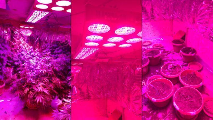 Житель Алматинской области выращивал марихуану, используя солнечные батареи