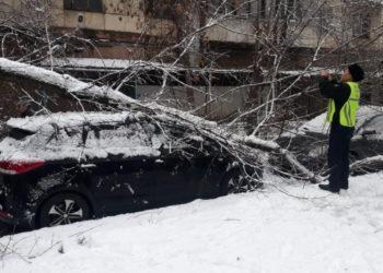 Алматинцам советуют не парковать транспортные средства под деревьями 4