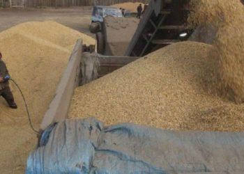 Муляжи из соломы и навоза вместо зерна: предпринимателя из ВКО осудили за хищение госрезерва