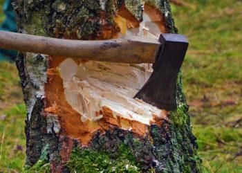 Массовая вырубка деревьев при строительстве ТРЦ: акимат Алматы подал в суд