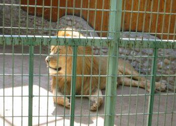 «Животные гниют заживо»: в Кызылорде требуют закрытия и отъезда российского зоопарка