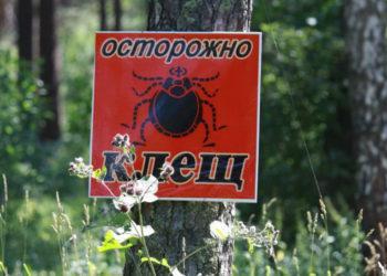 В Туркестанской области начали борьбу с клещами