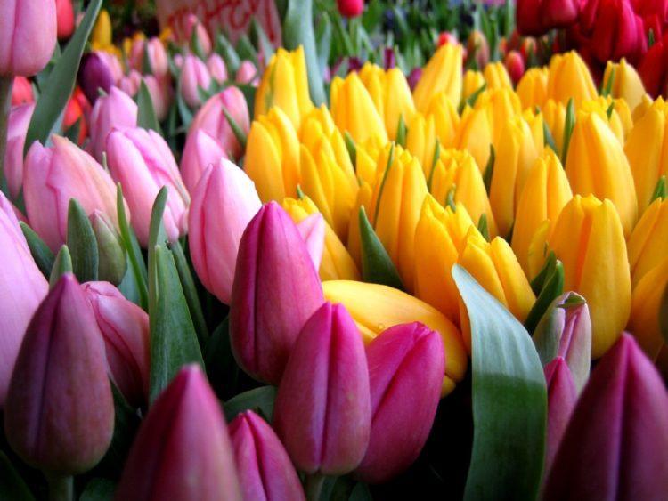 Токаев поздравил казахстанских женщин с 8 марта