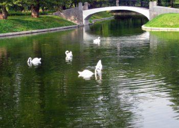 В новом парке Туркестана выпустят лебедей