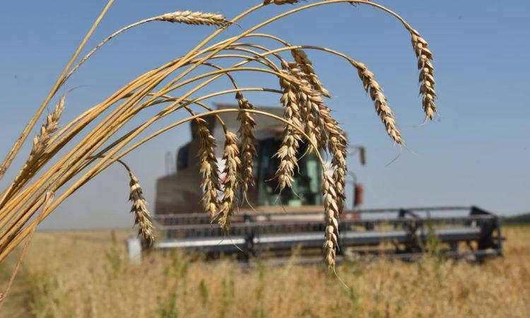 Какой урожай пшеницы соберет Казахстан в 2020 году рассказали в МСХ 1