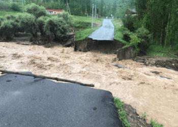 Вода смыла автомобильные мосты и повалила деревья в Туркестанской области