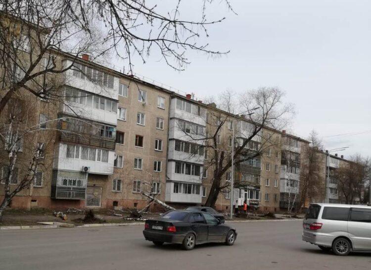 В Петропавловске вырубили здоровые деревья, чтобы посадить новые и освоить бюджетные средства 1