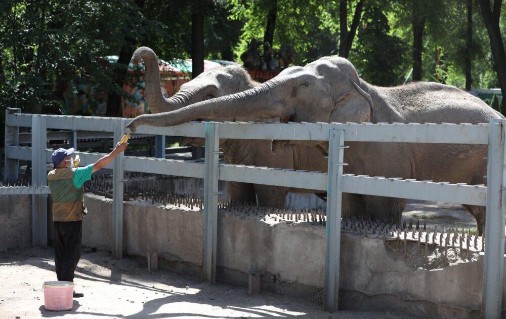 «Никто не голодает, но трудности есть»: как переживает карантин Алматинский зоопарк 16