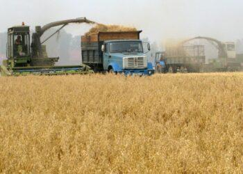 Разочарование фермеров, миллиарды на импорт. Почему сельское хозяйство Казахстана топчется на месте?