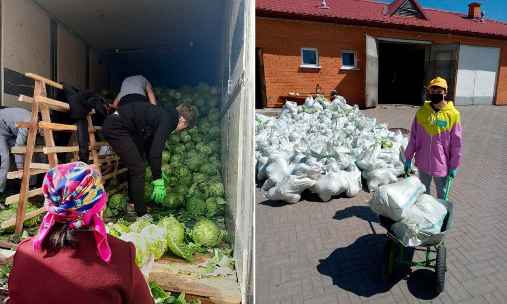 Темиртауским медикам раздали на работе капусту 1
