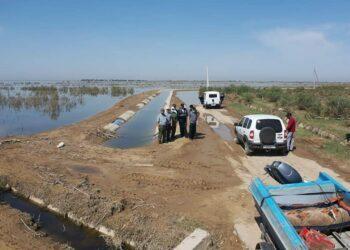 Рыба в сточных водах Мактааральского района непригодна для пищи 2