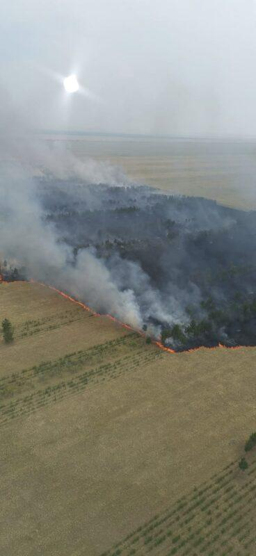 Жара и грозовой разряд: в Павлодарской области бушует крупный лесной пожар