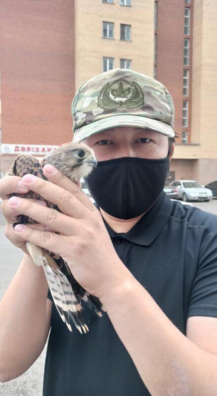 Хищную птицу поймали на улице Нур-Султана 1