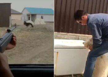 Проверить на вменяемость душившего собаку жителя Атырау требует Аружан Саин