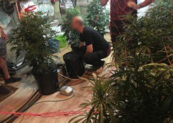 Павлодарец вырастил в гараже элитной конопли на 14 млн тенге, но продать не получилось 3