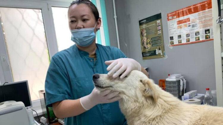 Едва не задушенную собаку из Атырау хотят забрать в США 1