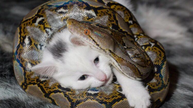 Кормил питона котятами: Карагандинец опроверг живодерское меню своих змей 1