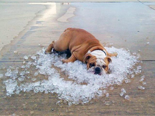Как спать в жару без кондиционера? Советы врача 1