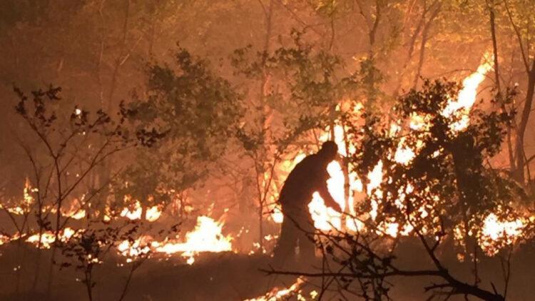 Из-за жары в Казахстане горят леса и степи 1