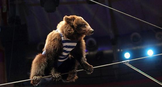 В Алматы животные цирка могут остаться без питания 1