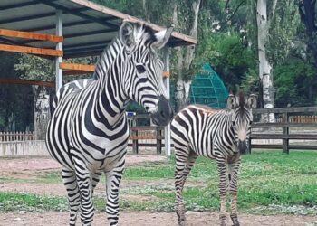 Фото со страницы Алматинского зоопарка в Facebook