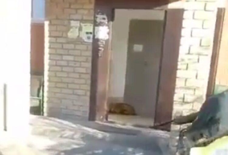 В Экибастузе волка застрелили в подъезде жилого дома 1