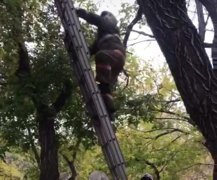 В Караганде мальчик полез на дерево за деньгами и застрял на опасной высоте 1