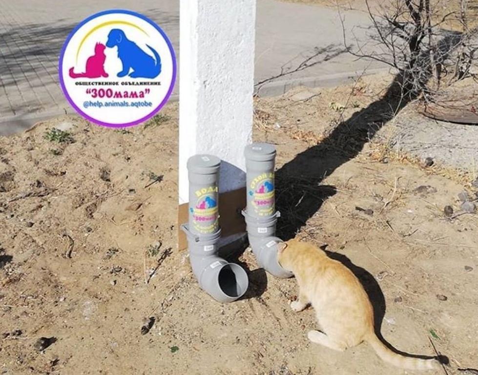 Кормушки для бродячих животных установила волонтер из Актобе 1