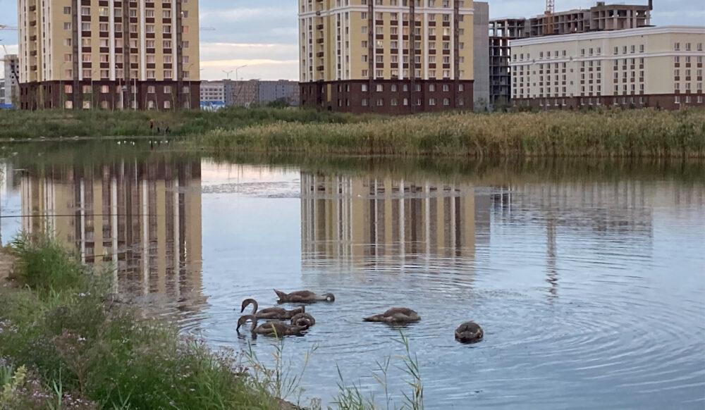 В озере Малый Талдыколь нашли холеру и другие опасные бактерии 1