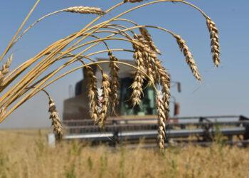 Казахстан не будет вводить запрет на экспорт урожая 1