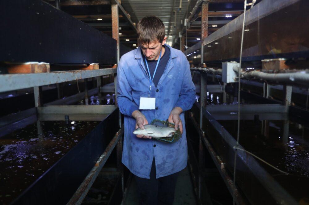 В Капчагае есть уникальный рыбопромышленный комплекс. Для чего он нужен и как он работает 5