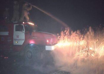 Около 700 овец заживо сгорели при пожаре в Кызылординской области 4