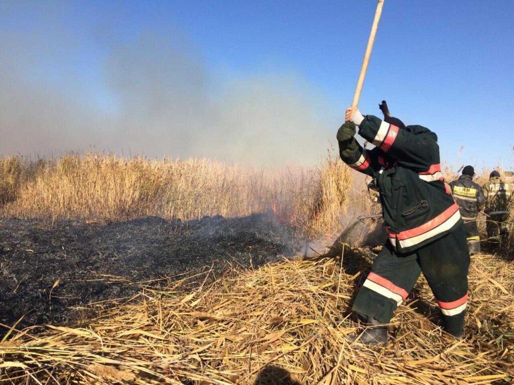 Крупный пожар камышовых зарослей потушили в Атырауской области 1