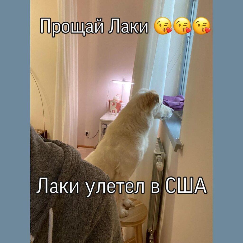 Собака, которую душили дверцей холодильника, улетела в США 1