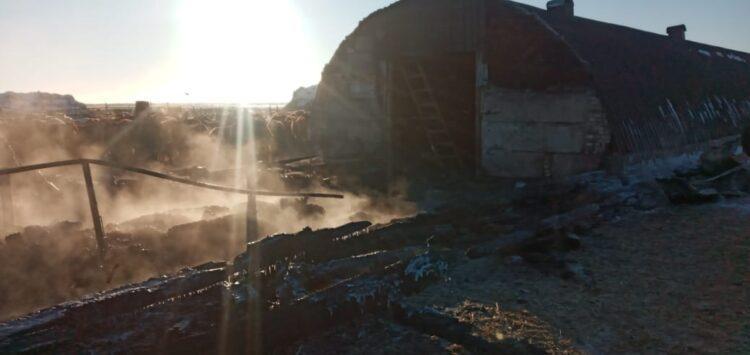 Пожарные ехали полтора часа: в Карагандинской области заживо сгорели 47 телят и 20 баранов 1