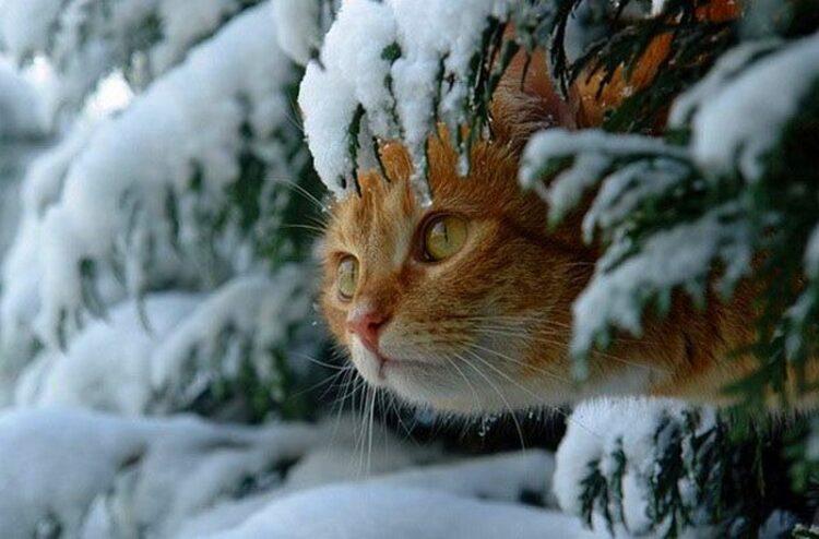 Фото: kmsk.dp.ua