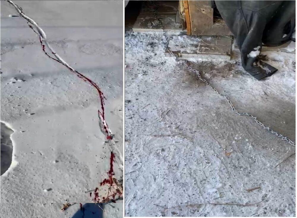 Собаку убил и сжег кочегар бизнес-центра в Караганде 1